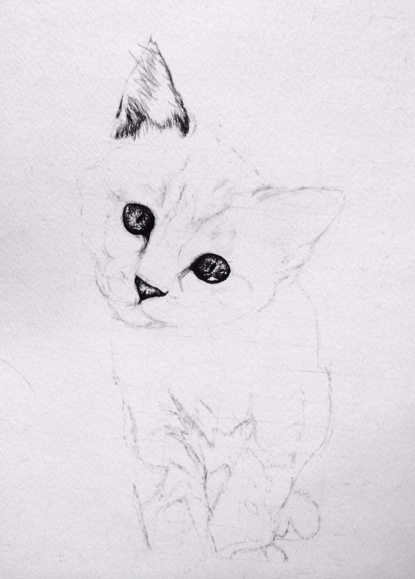 Kitten Pen Ink Drawing Stage 1 Ink Pen Drawings Drawings Artwork