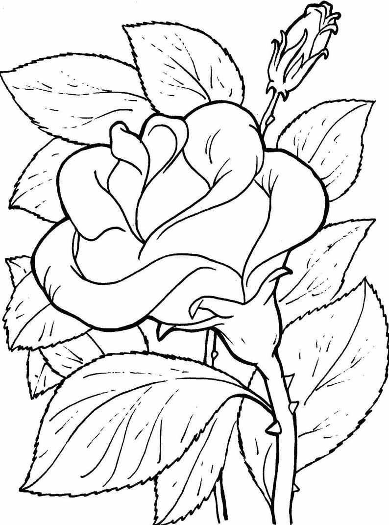 Ausmalbilder Blumen Ranken : Blumen Ausmalbilder 06 Pinteres