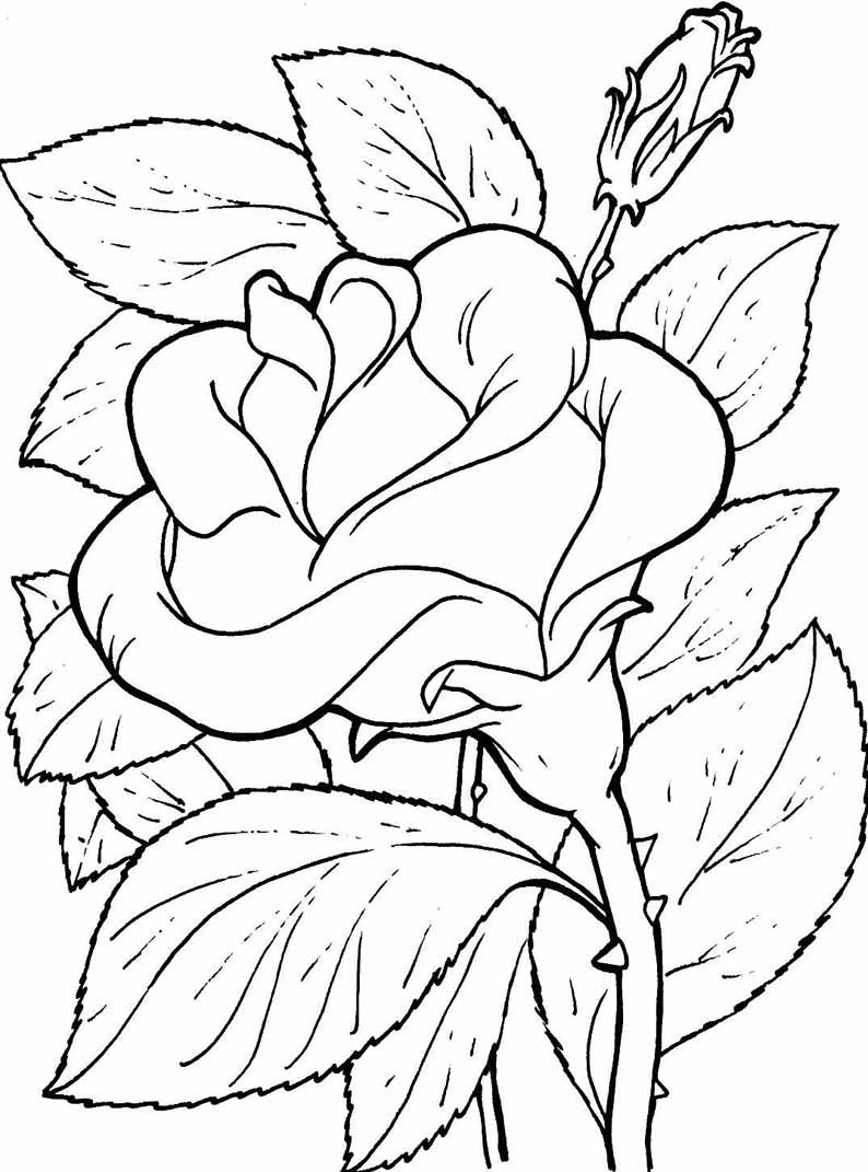 Blumen Ausmalbilder 06 Pinteres
