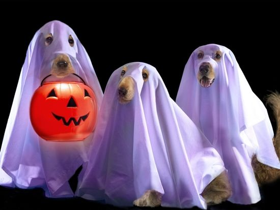 funny ghosts - ????????? Google & funny ghosts - ????????? Google | animals | Pinterest | Funny ghost ...