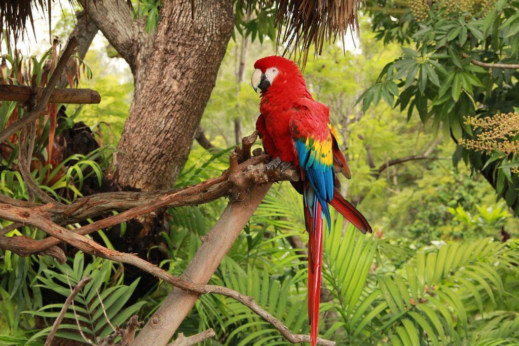 Tropical Rainforest Parrot Animals Information Birds