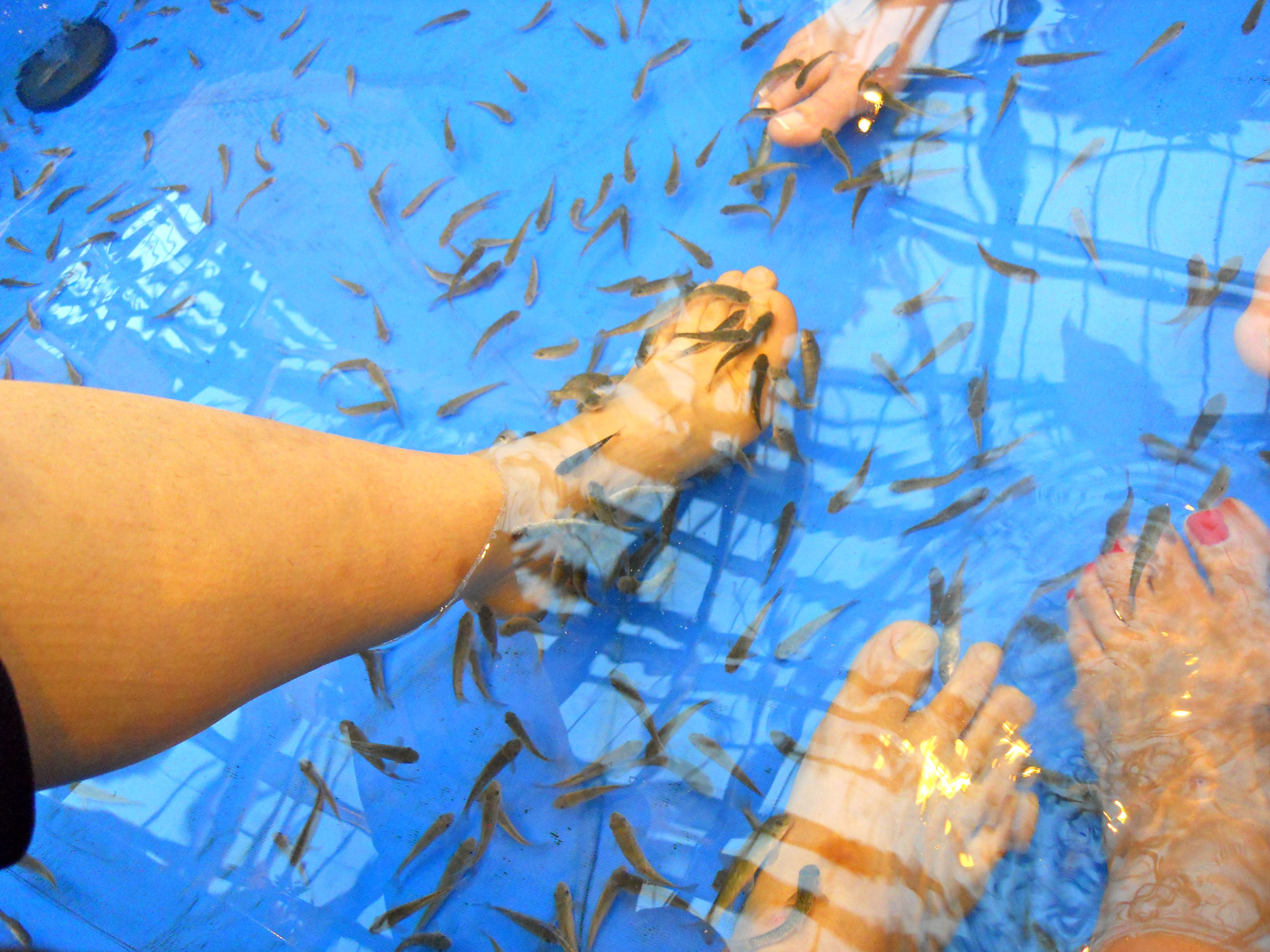 Getting a fish pedicure in kyoto japan very tickley dr for Doctor fish pedicure