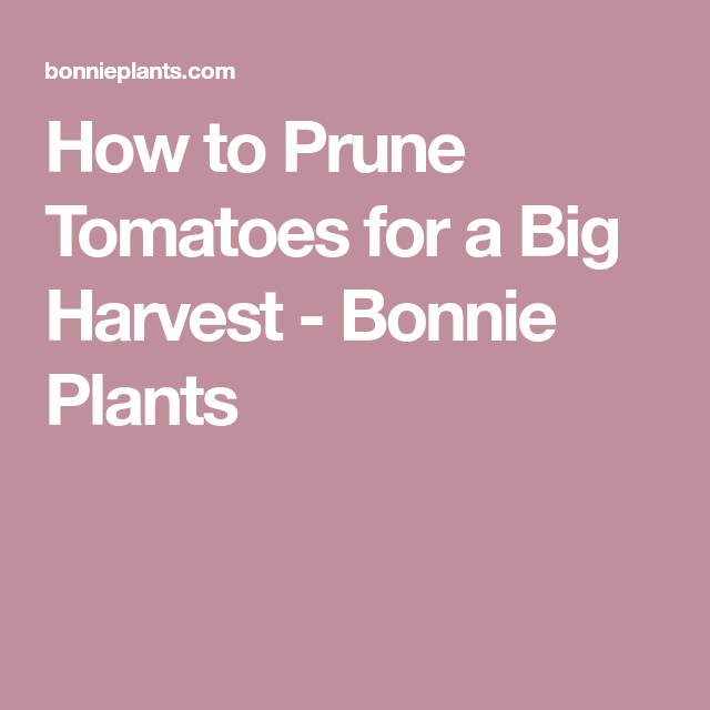 Bonnie Plants Vegetables