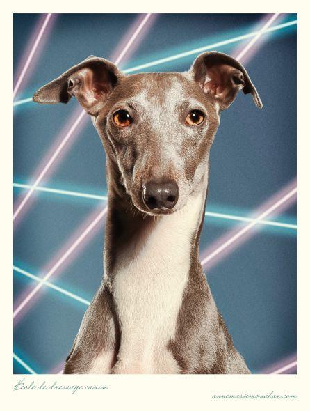 I own 2 Italian Greyhounds - Daisy & Lily (who kind of ...
