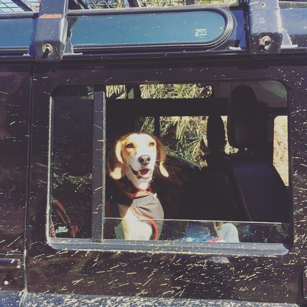 #defender #defender90 #defender110 #defenderitalia #heritage #defender_life_style #defender_for_ever #offroad #4x4 #landrover #landlovers #landroveritalia #searchandrescue #landroverdefender #picoftheday #defenderlove #td5 #td4 #ilovelandrover #leggenda #offroaditalia #offroadlife #extreme #dogs #puppy #beagle #lagotto #dogstagram #puppylove #defenderdogs @projectoverlandy by _defenderdogs_ #defender #defender90 #defender110 #defenderitalia #heritage #defender_life_style #defender_for_ever…