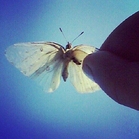 Flyyy