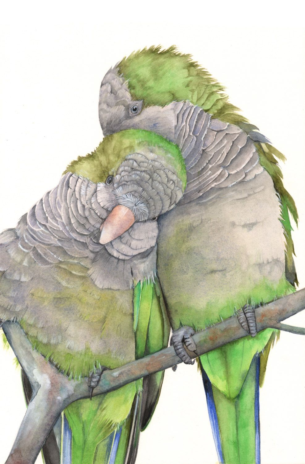 Parrot Painting Print of watercolor painting A4 print by LouiseDeMasi on Etsy https://www.etsy.com/listing/205386711/parrot-painting-print-of-watercolor