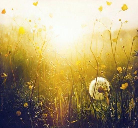 sunlight, buttercups and dandelions