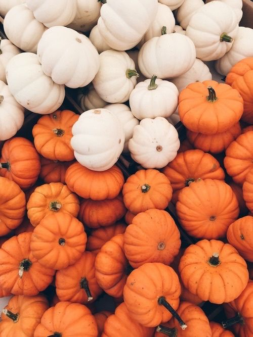 autumn, Halloween, and pumpkin image in 2019 Fall