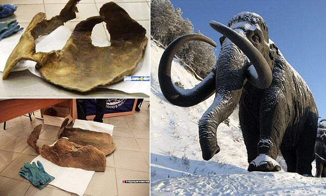 Woolly mammoth skin's living cells could help bring the beast back to life | Daily Mail Online