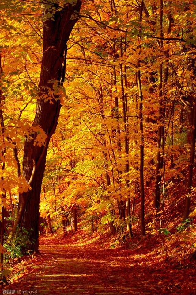 That I could return to others what you impart to me, the world would be the finer and live in dazzling light oh Autumn fine