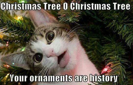 O Christas Tree Sigh Haaahha So Funny Christmas Memes Funny Christmas Memes Christmas Humor