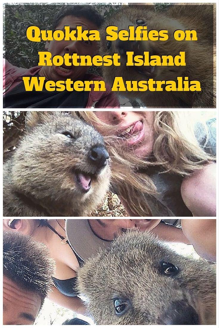 Rottnest Island Quokka And More Western Australia Western Australia Quokka Australia
