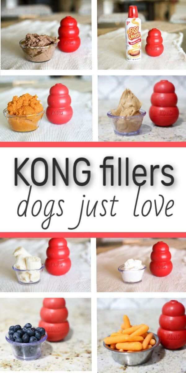 Photo of 15 KONG Fillers Your Best Friend (Dog) Will Love