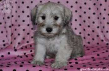 Ship From Gfp Shipping Puppies Greenfield Puppies Greenfield Puppies Puppies For Sale Puppies