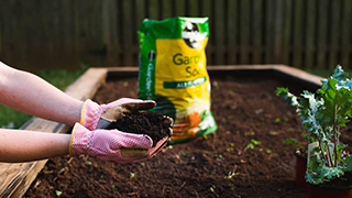 Why It's Important to Use Good Soil (With images) Garden