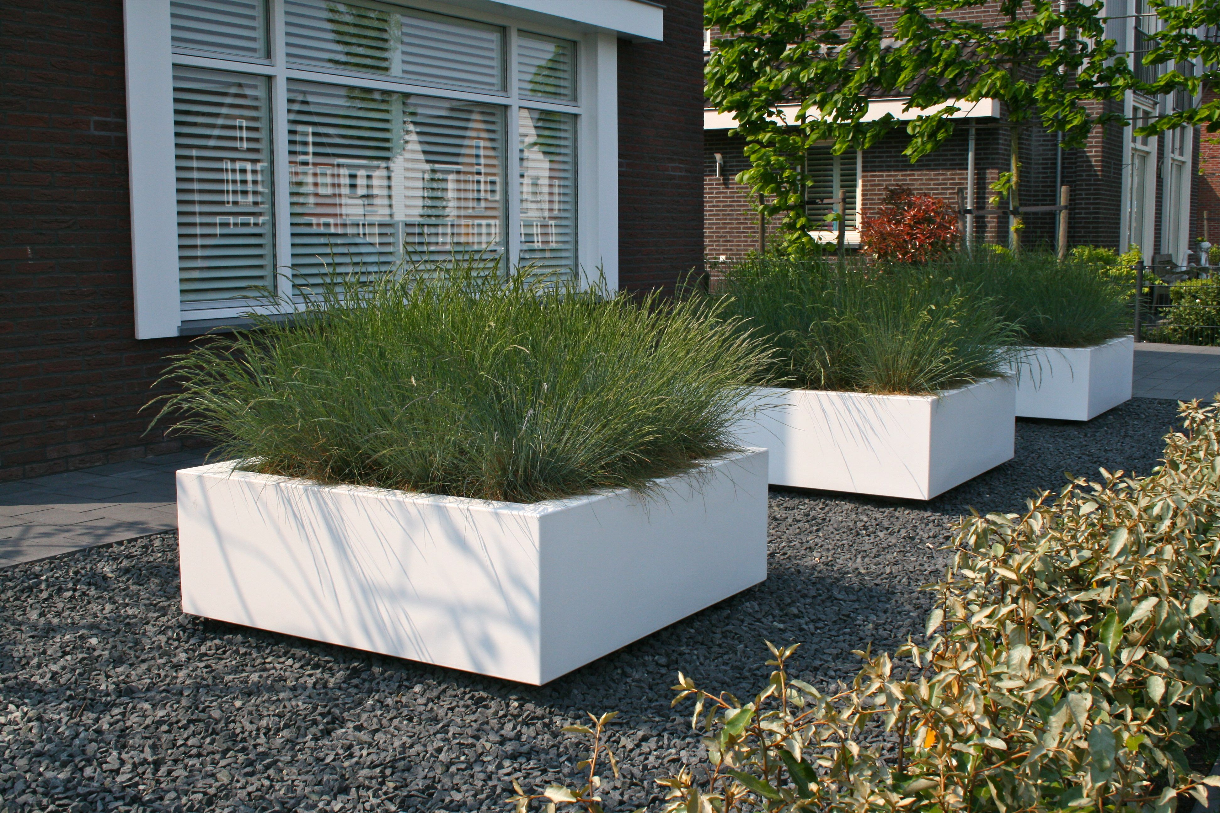 moderne voortuin met grote planten witte bakken aangeplant met festuca 39 intense blue 39 tuinen. Black Bedroom Furniture Sets. Home Design Ideas