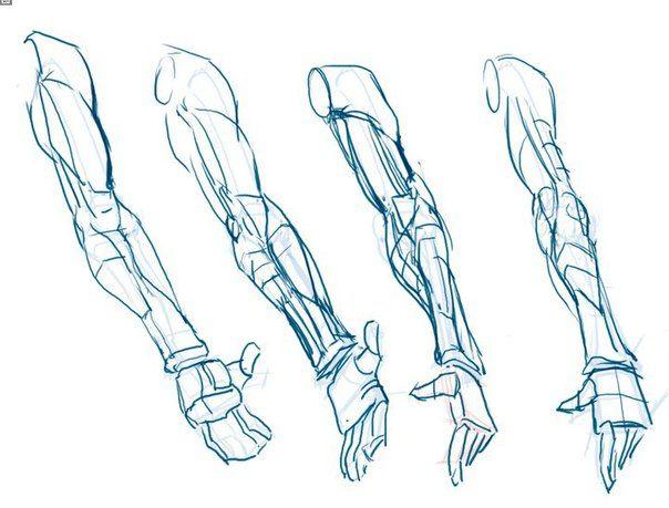 Pin de Juany Fuentes en Anatomia humana / Human Anatomy   Pinterest ...