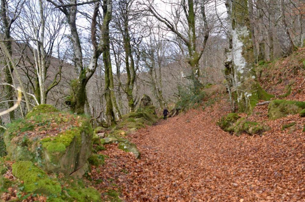 Bosque de cuento entre Busnela y San Pedro del Romeral   Imagen 26