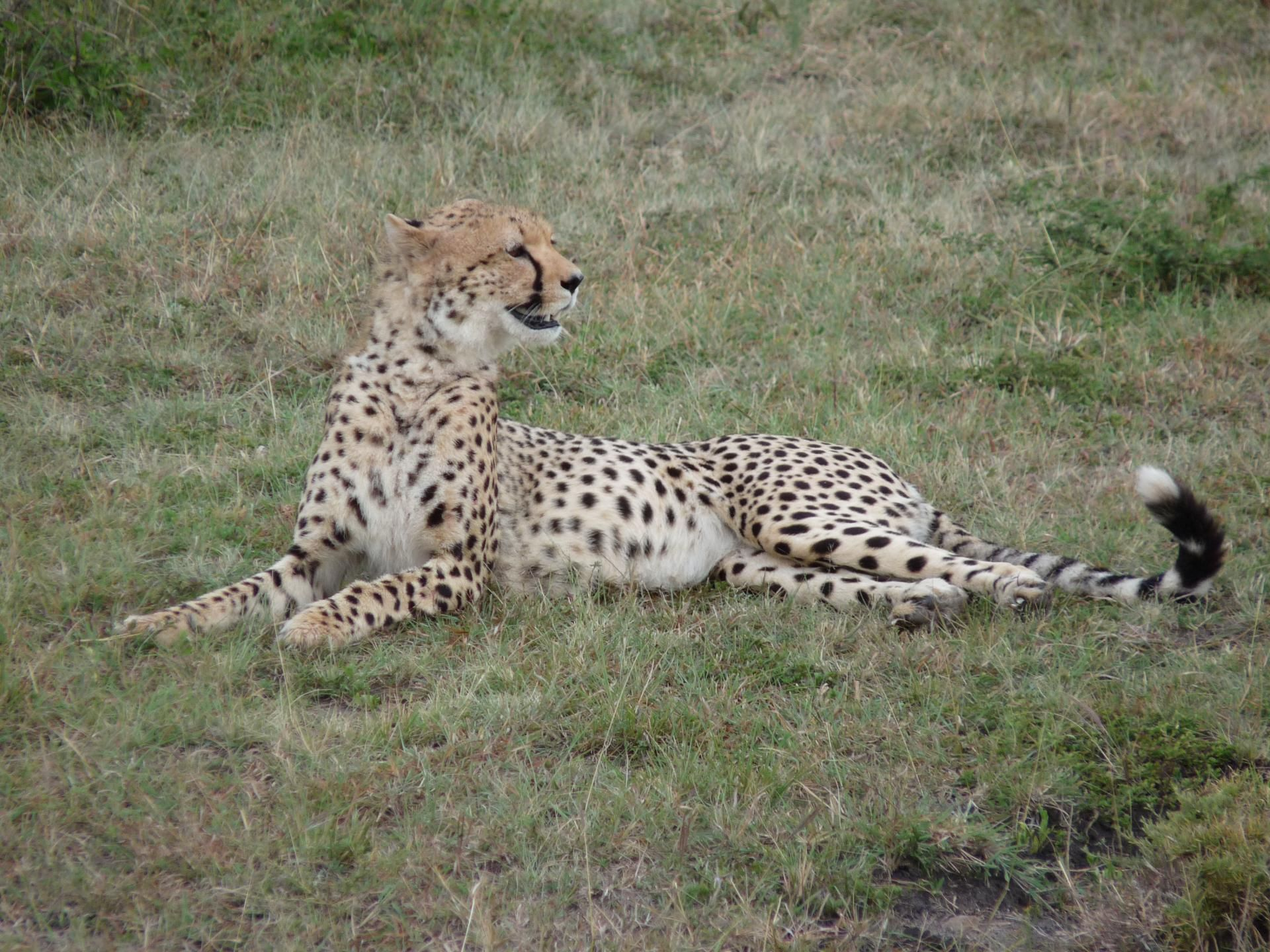 Best African Safari Tours Our Top 10 Picks Travel