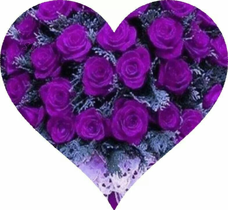 Beautiful Purple Roses Heart With Images Purple Roses