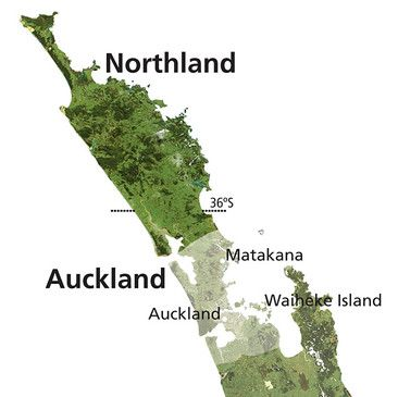Wine Region of Auckland - Image Courtesy of New Zealand Wine Institute