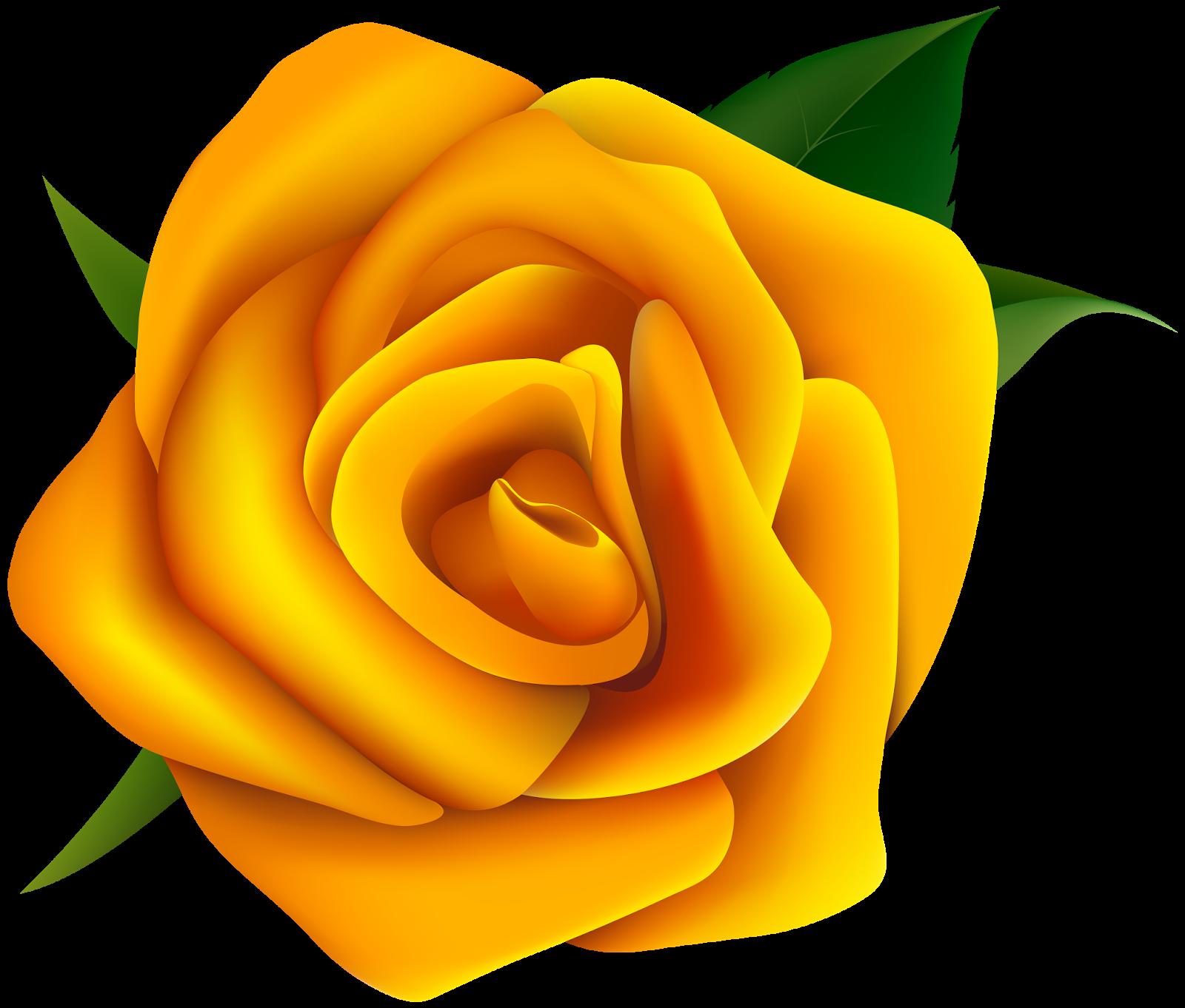 Картинки желтых роз на прозрачном фоне для фотошопа, гифы добрым