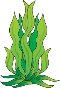 seaweed outline vector magz free download vector graphics vbs rh pinterest com seaweed vector images cartoon seaweed vector