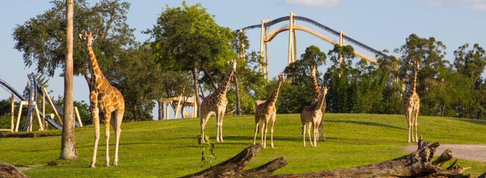 4bfa0f2a0197afef3063e7b80c5c1d15 - Is The Safari Included In Busch Gardens
