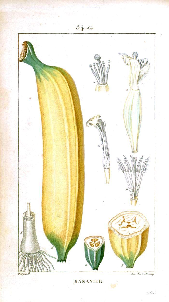 Botanical - Fruits, Vegetables, Other Ingestables | Fruit ...