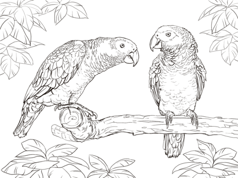 Click To See Printable Version Of Two African Grey Parrots Coloring Page