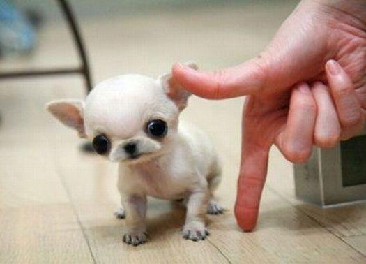 Pin Em Cute Animals I Love