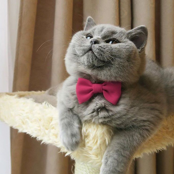 Oh my! We just love Pandora   @pearlescent_british_cats . . . #catifyco #catsofinstagram #bestmeow #instagram #british #meow #kittens #kitty #cats #cute #ilovemycat #instagramcats #catloversclub #weeklyfluff #cutepetclub #petstagram #furry #catoftheday #instagood #instacat_meows #cat_features #love #lovecats #lovekittens #animaladdicts #igmeows #catsagram #photooftheday