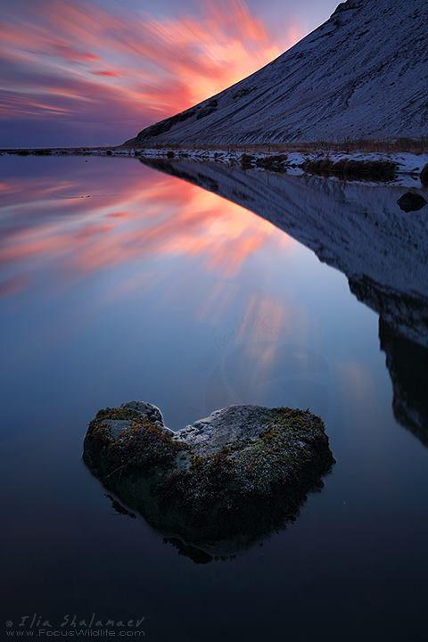 The heart :)  Nature Photography by Ilia Shalamaev