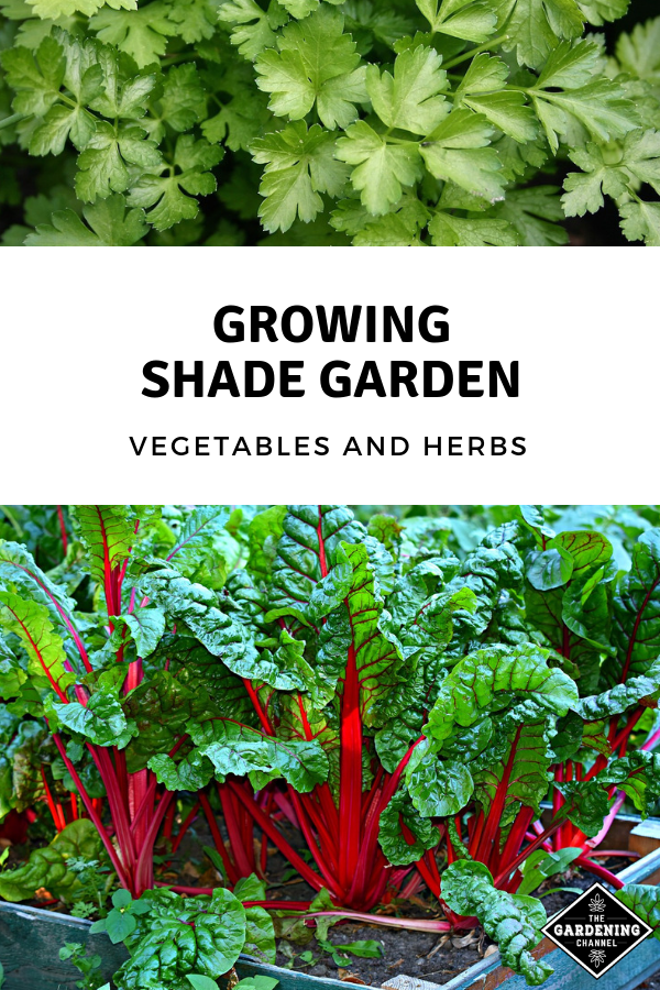 Growing Shade Garden Vegetables and Herbs - Gardening Channel