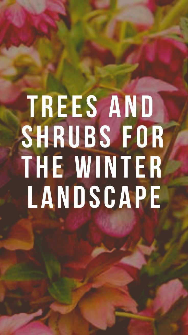 Trees and Shrubs for the Winter Landscape,  Trees and Shrubs for the Winter Landscape,