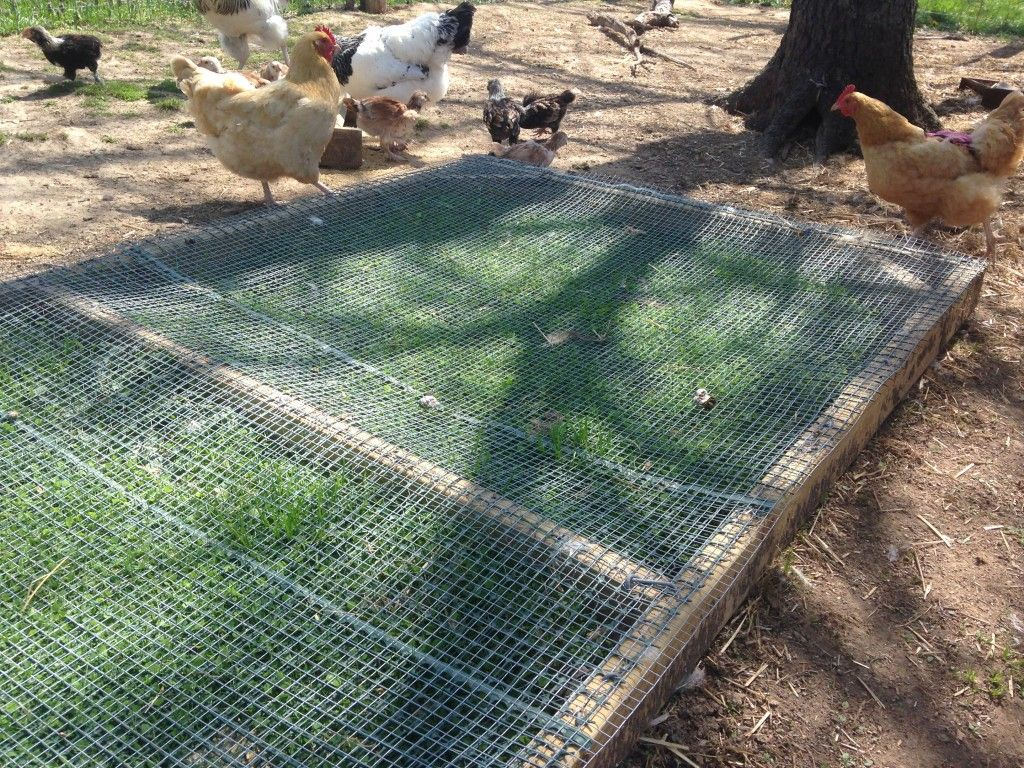 reseeding your chicken run it u0027s about time to move the boxes and