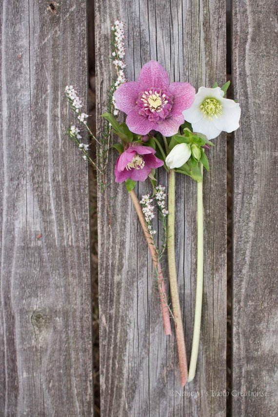 Rustic Floral Wall Art Shabby Chic Decor Hellebore Photo Etsy Flower Art Flowers Photography Rustic Floral Wall Art