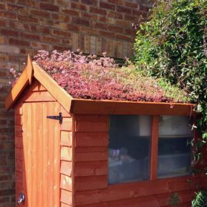 Rooftrade Multicolour Living Roof (L)7M (W)1000Mm   Living ...