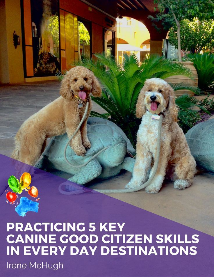 Practicing 5 Key Cgc Skills In Every Day Destinations Lists 20