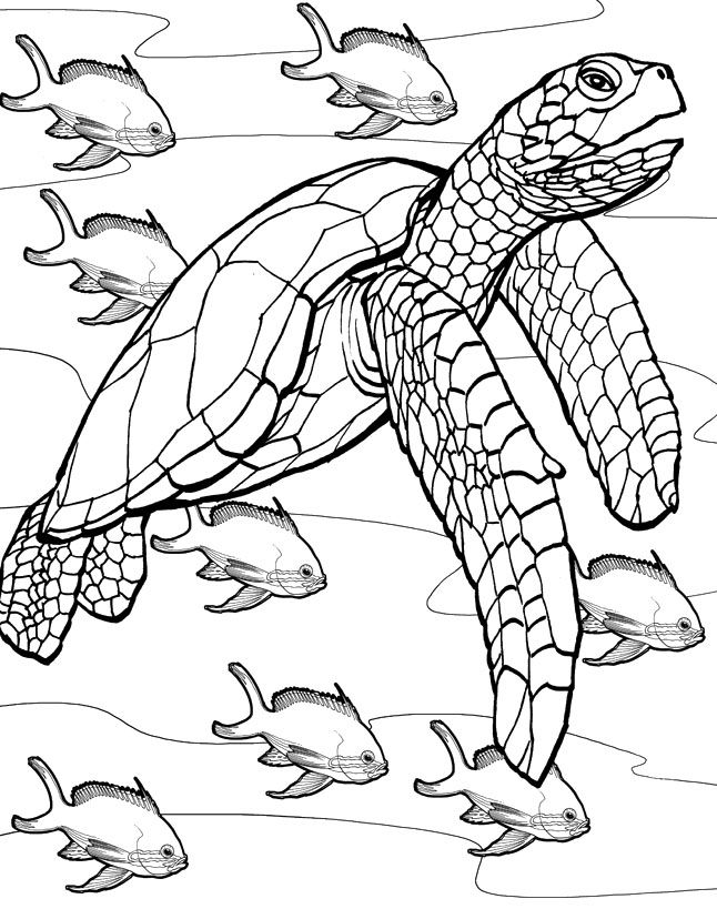Turtle and fish coloring page