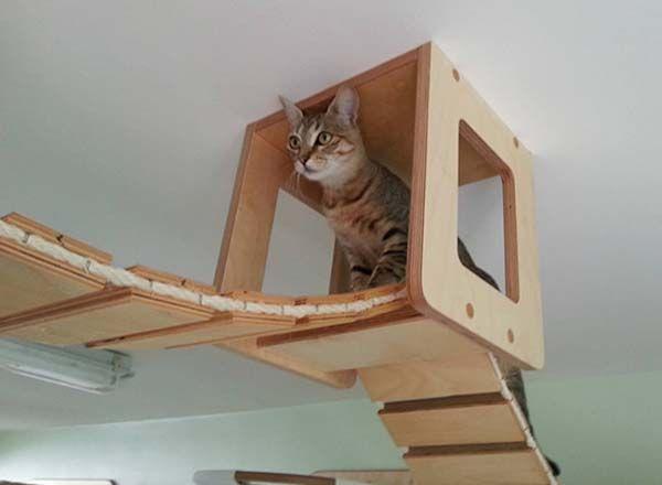 Goldtatze Cat Heaven Bark Meow Cat Wall Cat Furniture Cat Room