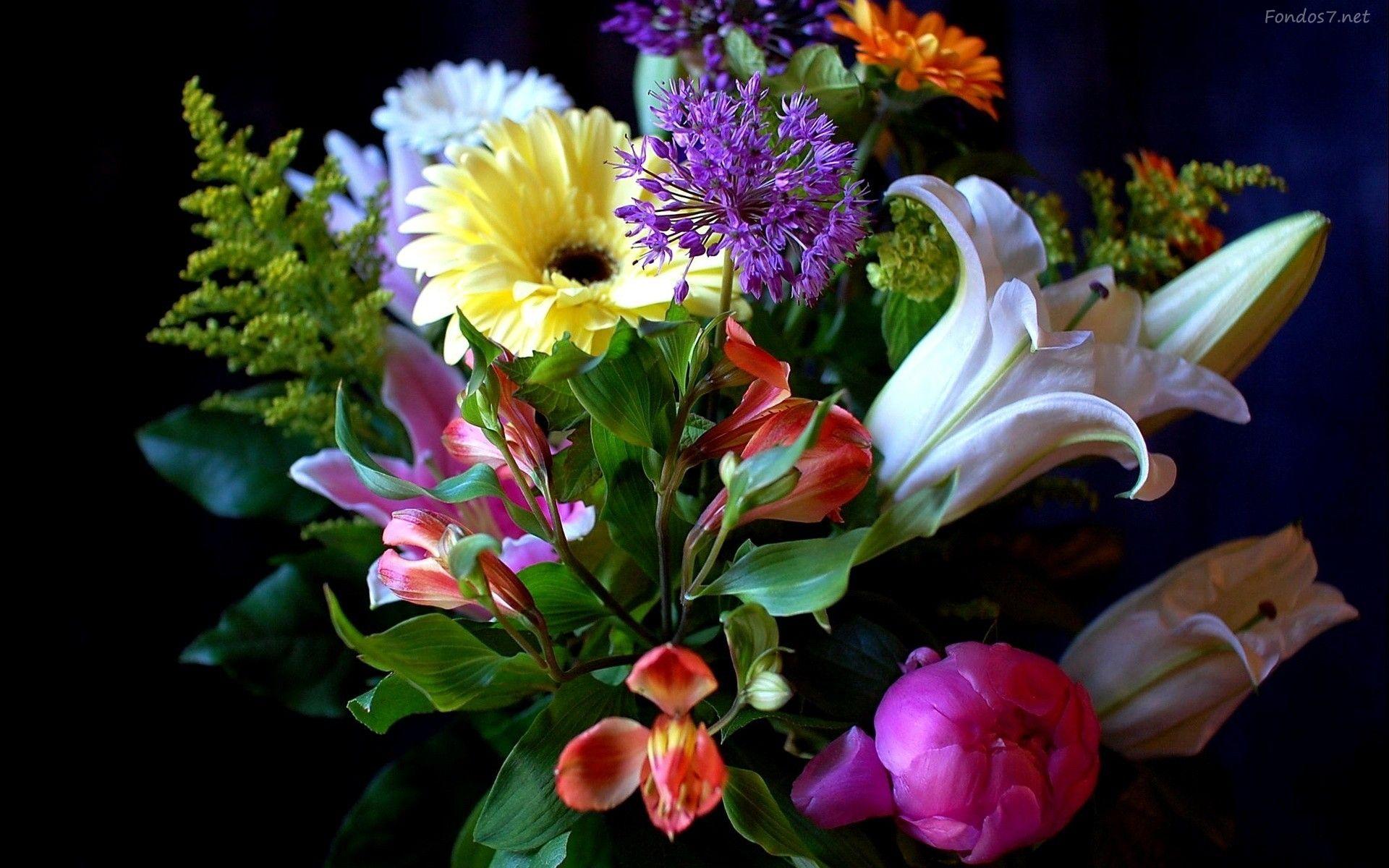 Fondo De Flores De Colores Para Fondo Celular En Hd 24 HD Wallpapers