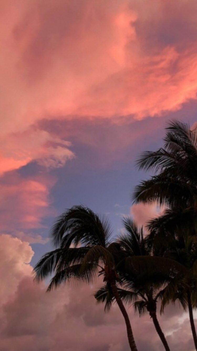 Sky Los Angeles Travel Nature Aesthetic Palm Trees Tumblr Sunset Tumblr