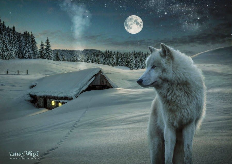 Over White Sparkling Blankets Of Fresh Fallen Snow The Cold Moon Illuminates The World And As The Wind Blows Off In The Snow Wolf Wolf Pictures White Wolf