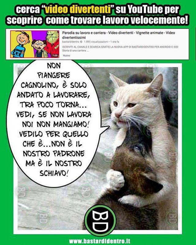 Bastardidentro Gatto Cane Bastardidentro Animali Divertenti