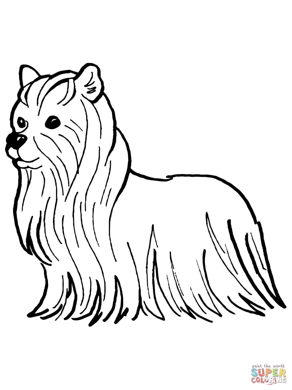Yorkshire Terrier Coloring Page Free Printable Sketch
