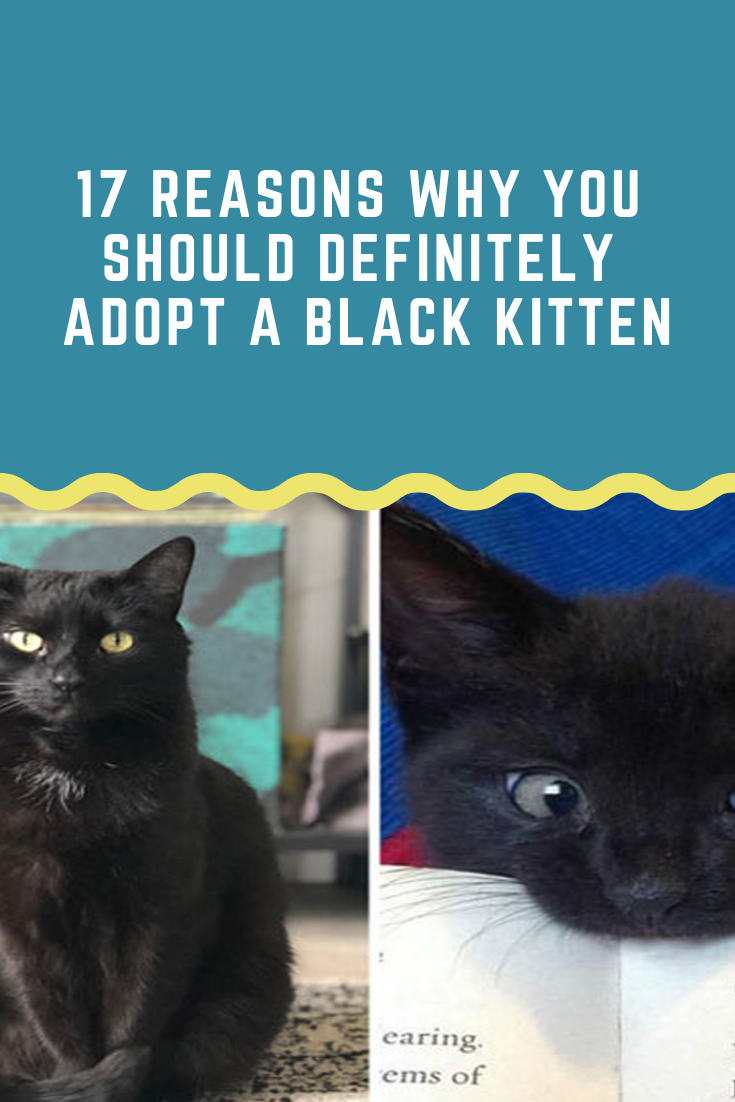 5 Common Cat Adoption Mistakes You Should Avoid In 2020 Cats Cat Adoption Kittens Funny