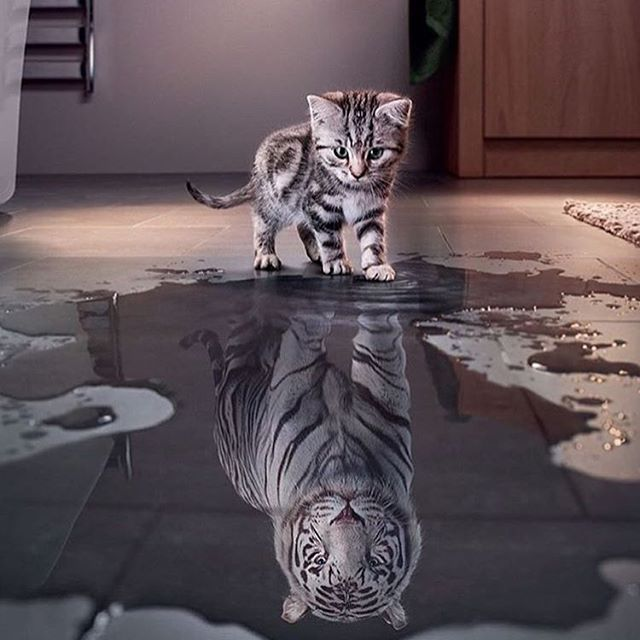 Thazzz deep!  Am going to frame that!  You like tigers too!  Nayce!  In life you must believe in yourself even when nobody else does... Have those ambitions that may scare you, but never be afraid to work hard and achieve them! Go get it! 👊🏽💯 #Ambition #Life