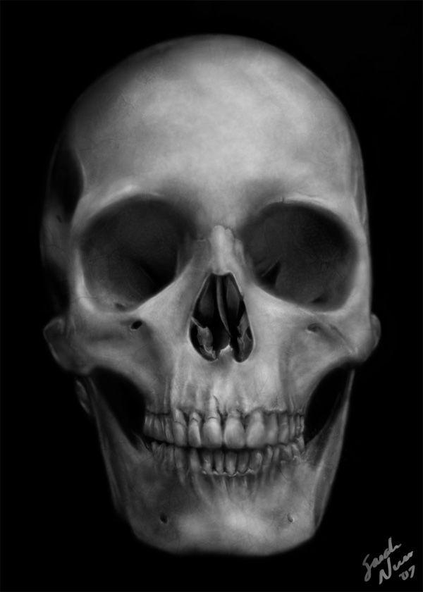 Anatomy Study: the Skull by saralyssan.deviantart.com on @deviantART